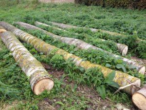 planter un arbre pour le bois