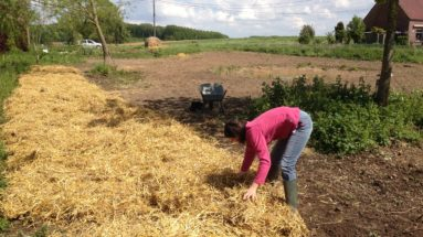 paillage permaculture