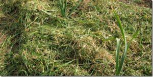 Mulch ou couverture de sol en tontes de velouses ou matières vertes