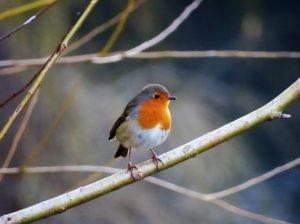 planter un arbre pour attirer les oiseaux