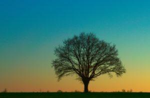 planter un arbre pour produire