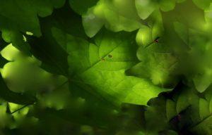 feuilles d'arbre plantée