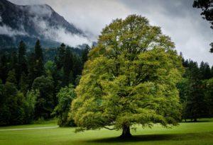 planter un arbre permet de produire de l'ombre