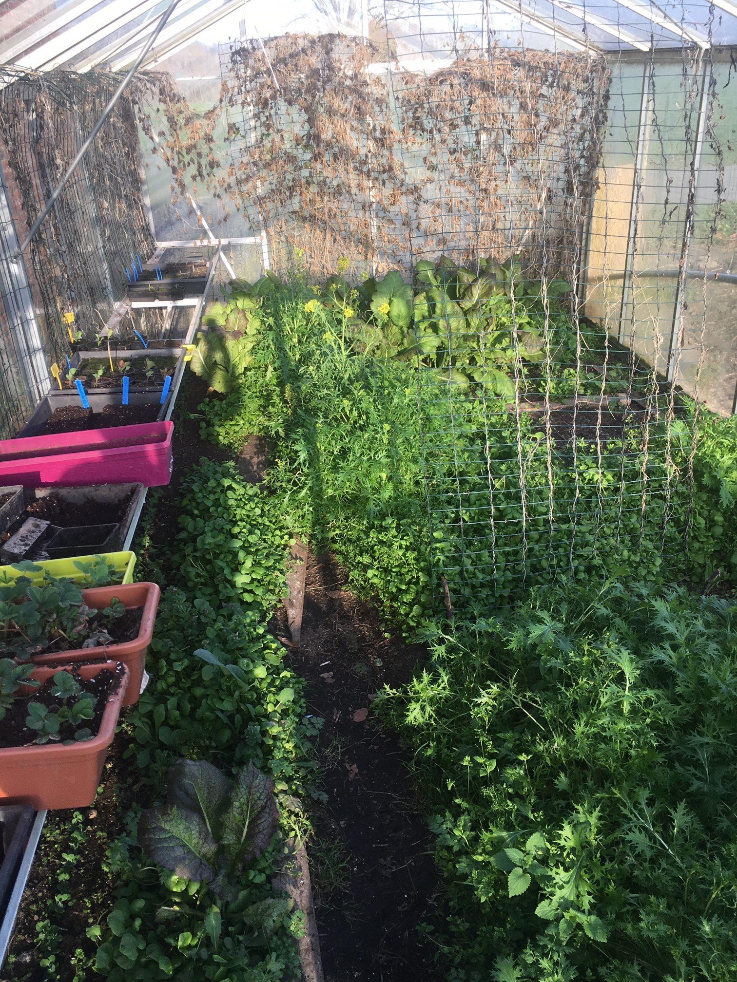 Que faire au jardin en mars ?