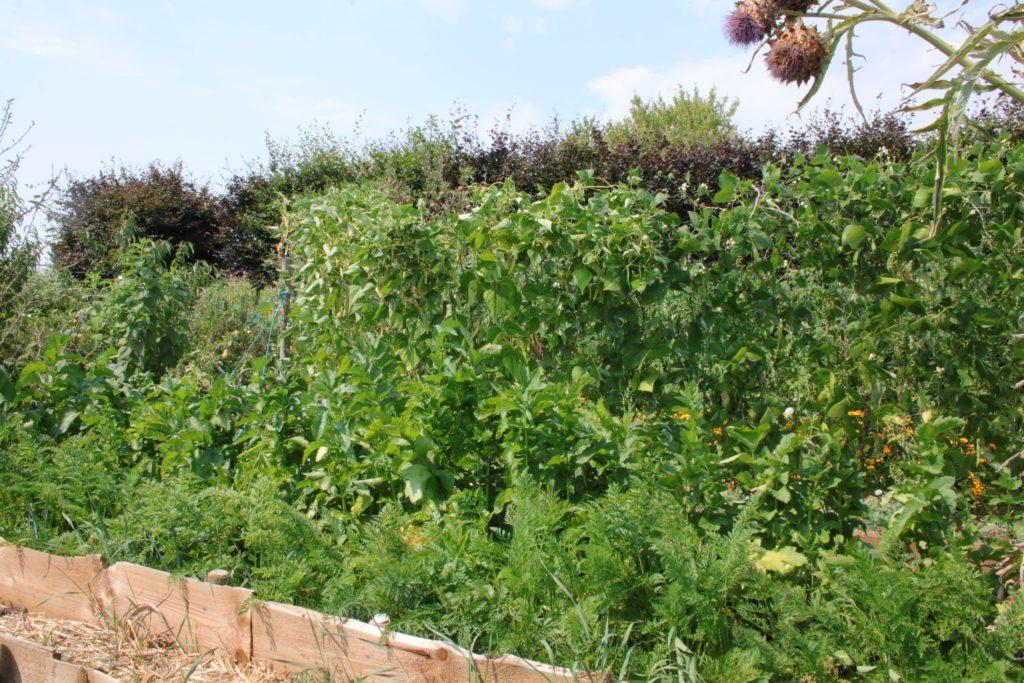 associer les légumes en fonction de leur taille et de l'ensoleillement