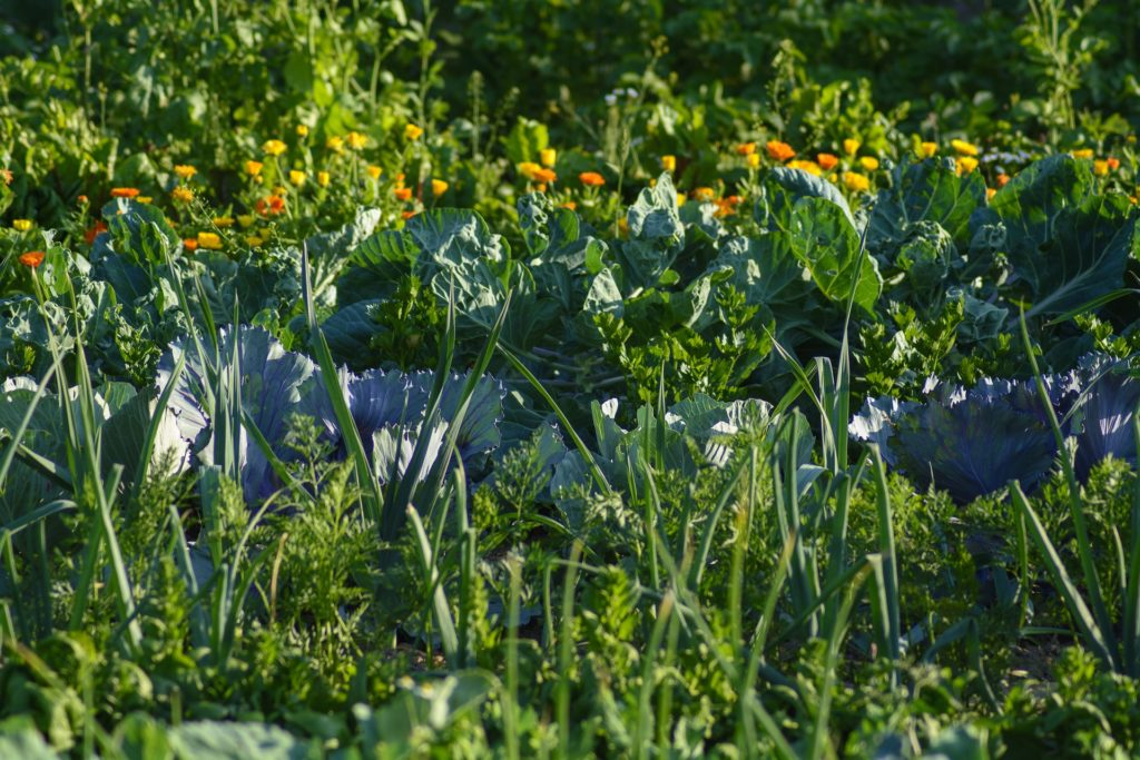association carottes poireaux choux céleri